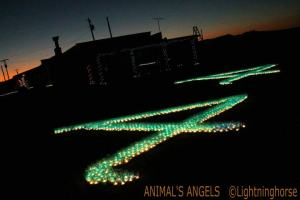 """Animals' Angels symbolizes outstanding guardianship for our equine and farm animals"""